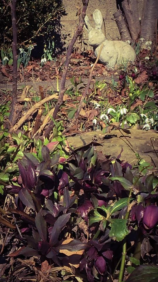 Spring Update Next Week ~ Monday March 12 6:30 pm