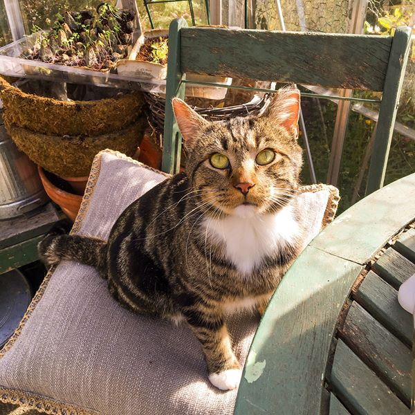 Remembering Our Sweet Leo – The Greenhouse Kitty