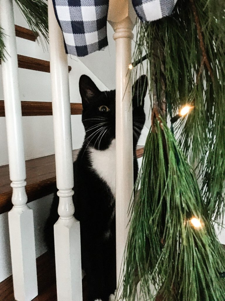At home with Oliver Kitty helping me decorate for Christmas