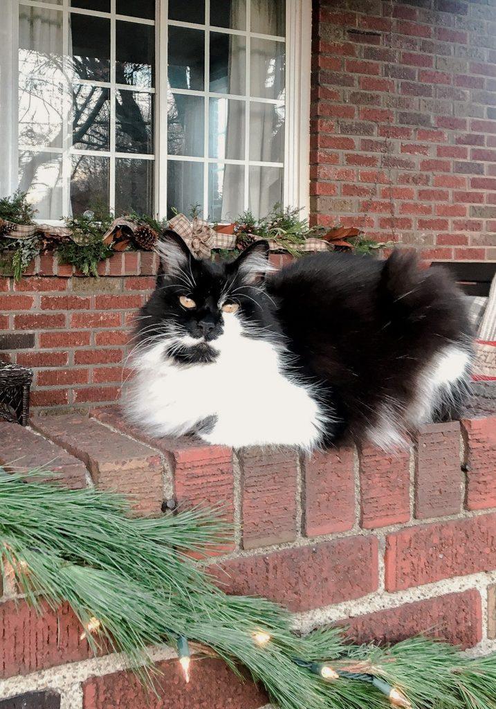 Iris Kitty on the Christmas Porch