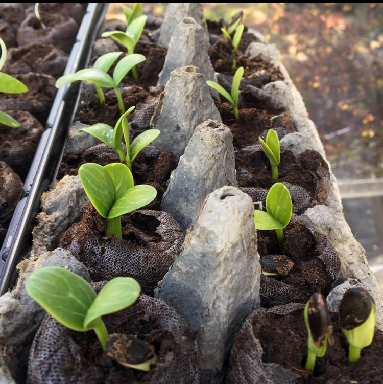Planting from Seed – Part 1 Spring Garden Planning