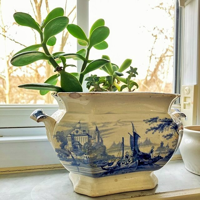 Home Tour Succulents in blue transferware
