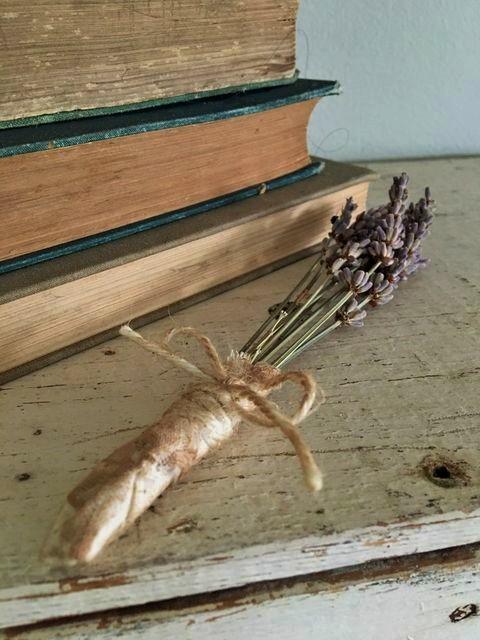 lavender for rosy rabbit