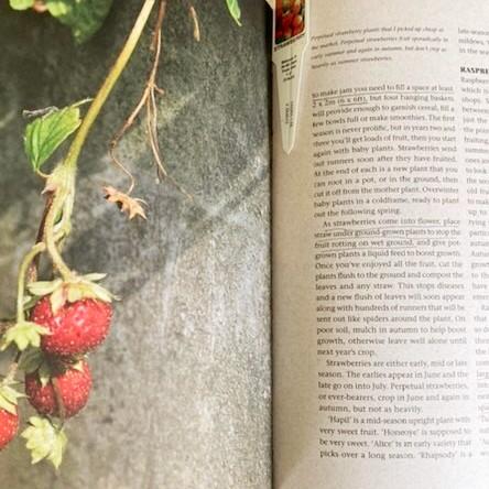 My Personal Best Gardening Reads: Alys Fowler