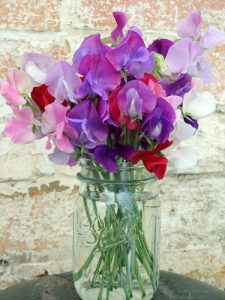 a pretty bouquet of sweet peas