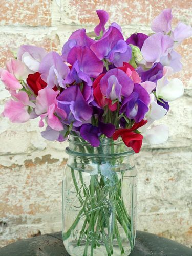bouquet of sweet peas in a canning jar