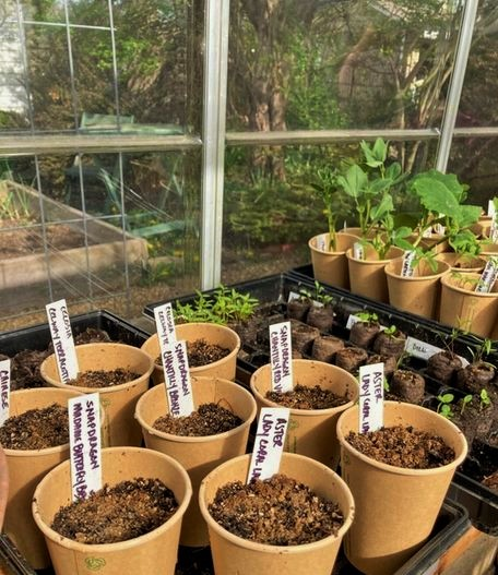 freshly planted seeds inside the greenhouse
