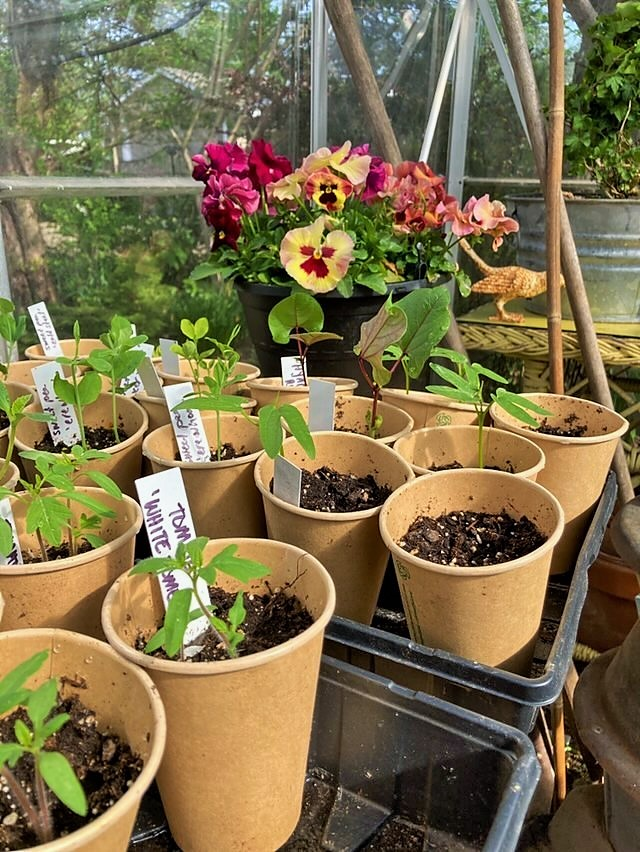 sprouting flowers and vegetables inside the greenhouse