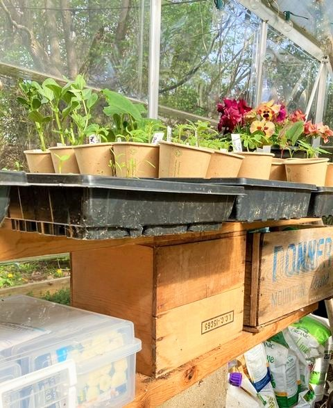 How its held together and trays of prouting flowers and vegetables inside the greenhouse