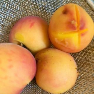 processing fresh peaches