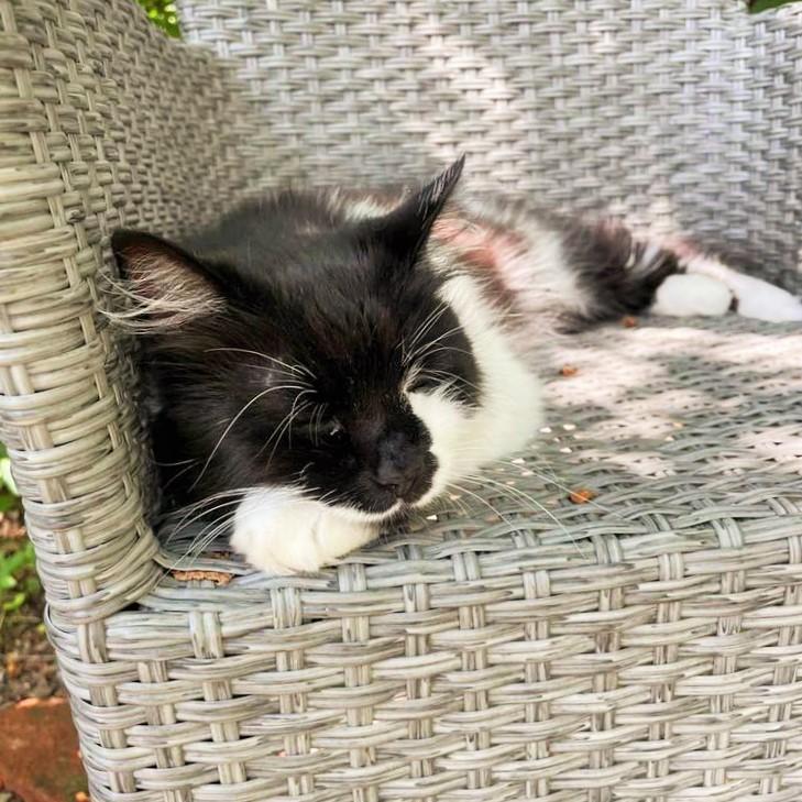 Iris on the garden chair