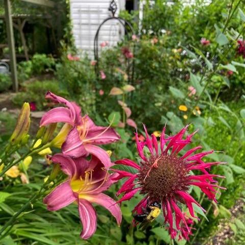 A look inside the garden